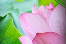 Pink meets Green