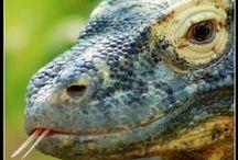 ---- Serps / snakes / frogs / lagartos ---- / by Esteban GC