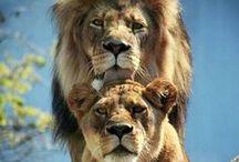 animales / ANIMALES DE TODO TIPO!!!