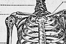 Artículos de Interés / Artículos de Interés para el Técnico Ortopédico