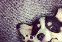 for Barney! / dog stuff