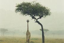 ~Wild Life~