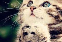 Kitty Kitty Kitty / stuff for cats :) especially mine!