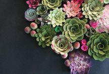 ••Flowers & plants••