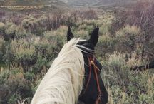 i want a horse / by Billie Agee
