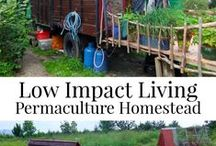 Permaculture / I heart design systems that build healthy communities and ecosystems. I'm looking at you, permaculture!