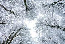 Trees / by Lauren Haacke