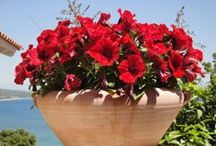 Nature's Garden / Photos of beautiful flowers and herbs in greek nature