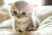 I Adore Kitties! :)