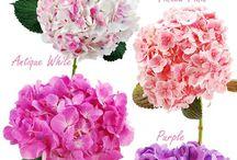 Flowers / Flower Details
