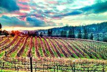 Auberge & winery