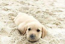 Pupper (`οωο `)