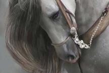 Horses / by Brin Carson