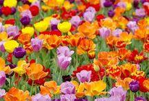 tuin ideeen / garden ideas
