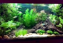 All Things Aquaria / I'm an aquarium enthusiast, so this board is dedicated to the aquarium hobby. / by Brin Carson