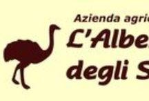 L' Albero degli Struzzi / Azienda Agricola L' Albero degli Struzzi di Lieggio Patrizia - Via Ortana, 58 - 05028 Penna in Teverina (TR)