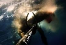 Spearfishing Videos / alchemy Spearfishing Experience!