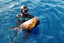 Spearfishing / alchemy Spearfishing Experience!