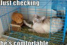 Cat antics