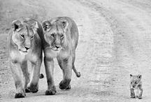 Leo's love lions
