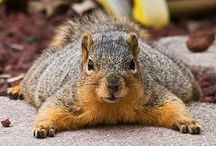 Squirrelly