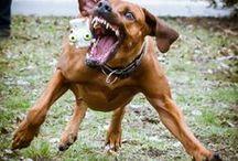 Kutyák / Dogs / Saját és más 4 lábúak képei