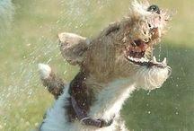Terriers!!!