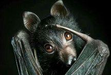Bats in my Belfry