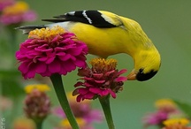 Nature is beautiful / Beautiful images from the natural world. Plants, animals, flowers, birds, trees...