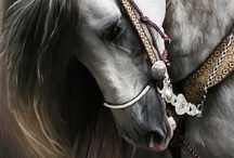 Horses / The most beautiful horses in the world