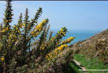 Mon Cotentin / Clichés cotentinois mais du reste de la Manche aussi.