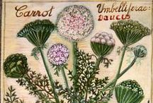 hodiny botaniky