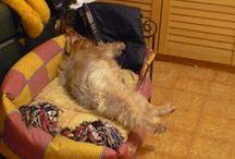 il mio cane bilbo