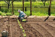LIVING Gemüsegarten
