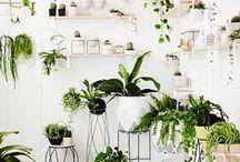 zahrada doma / květiny, aranže, pokojové květiny, nápady
