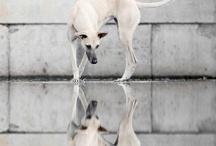 Mind like a shutter, eye like a lens... / by Susan Teixeira