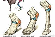 Anatomy - Creature