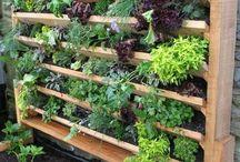 Planten, Terras en tuin