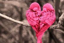 Animals / Love Animals!!