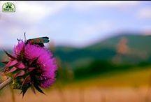 Casa Tonietti Natura Intorno a Noi - Nature Around Us