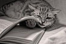 Tiere, Bücher & Magazine