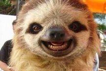 GÜLÜMSEYEN HAYVANLAR (Smiling Animals)