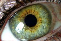 GÖZ (Eye - Iris)