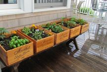 • How to grow Fruit & Vegetables / Tips on growing vegetables and fruit.