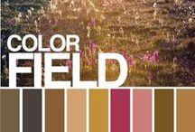 Color Palettes / by Suwapat