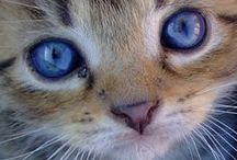 * Meow / Cats