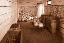 Root Cellar Ideas