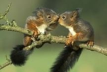 Cuteness Overload / Animals, critters, pets, wild beasts, kids, gestures.