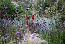 Ornamental Grasses- Ideas