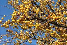 Best fruit/ berried shrubs & trees / Fruit for wildlife and fall/winter interest.